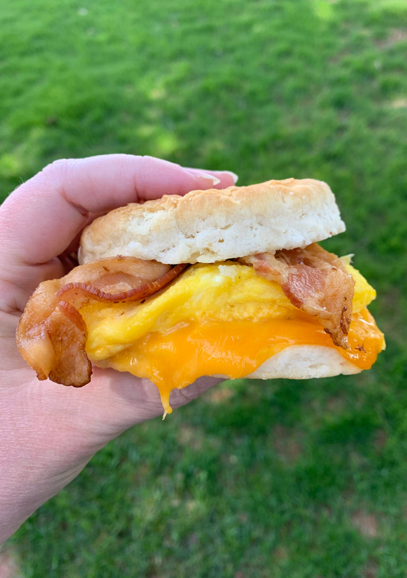 a hand holding a bacon egg cheese biscuit sandwich with grass in the background