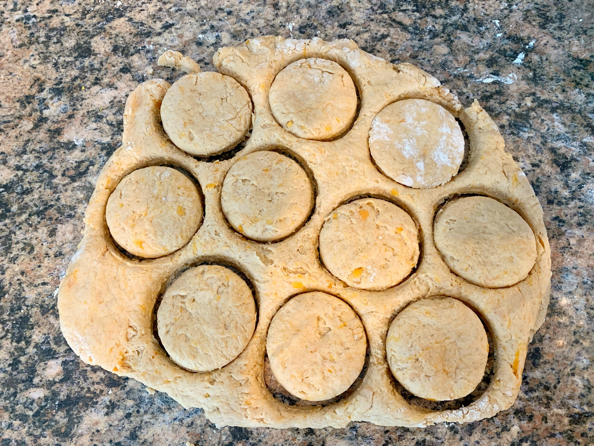 sweet potato biscuit dough rolled out with circles cut out for individual biscuits